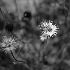 Zonlai 22mm f1 Fujifilm 6.jpg