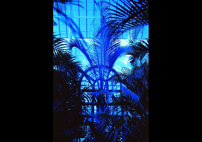 P blue 1.jpg