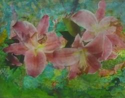 Pink Daylilies