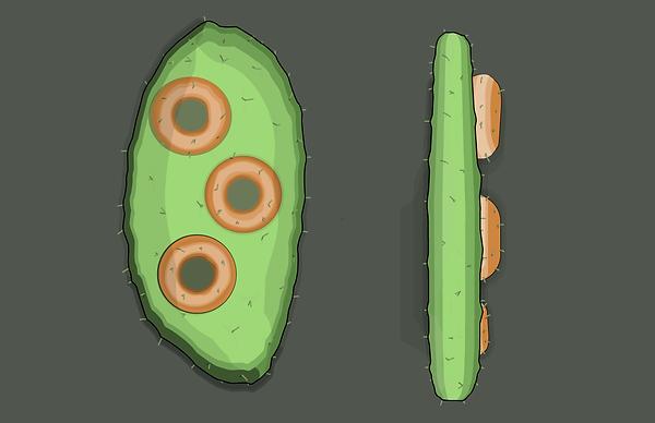 Cactus Doughnut.png