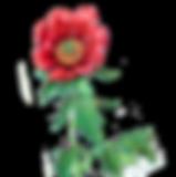 flowericonpng copy.png