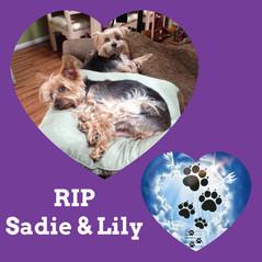 Sadie and Lily.jpg