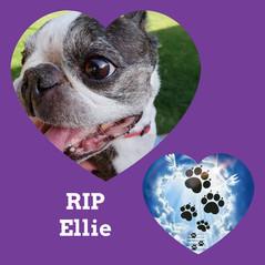 Ellie.jpg