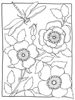 mariebrowning-coloring-wild-rose.jpg
