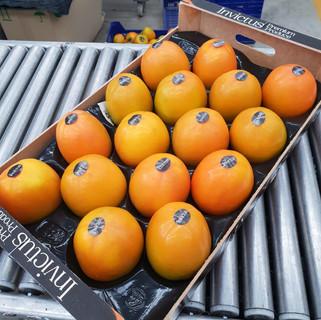 OKA Fruits Export - Rojo Brillante Invictus