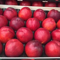 Apricot - Oka Fruits Export