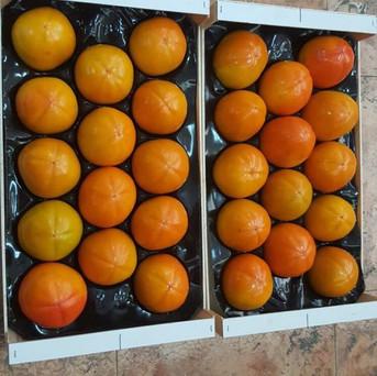 OKA Fruits Export - Rojo Brillante