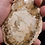Thumbnail: Petrified Wood Slice
