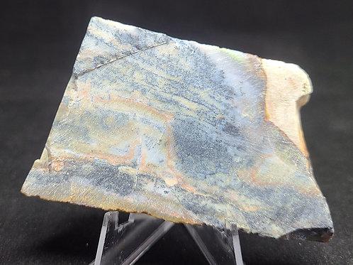Opalized Petrified Wood Slab