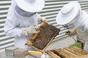 beekeeper-2650663_960_720.jpg