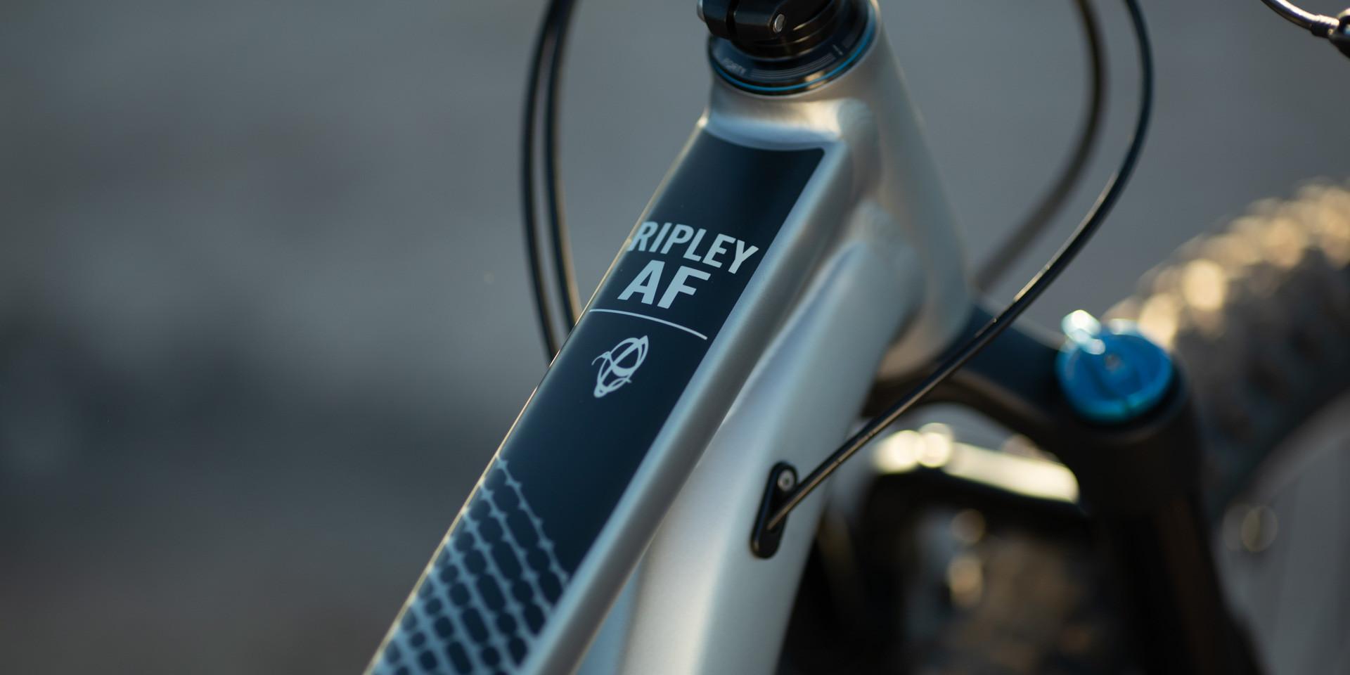 Ripley-AF-LM-0693.jpg