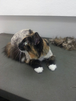Kitty After the grooming