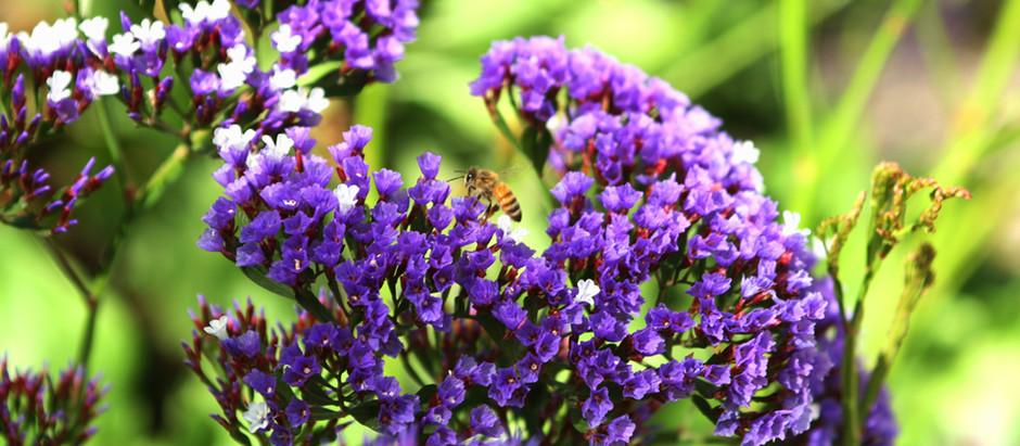 Purple Velvet Luxury