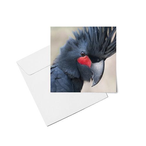 Endangered Birds - Set of 6 Bird Cards