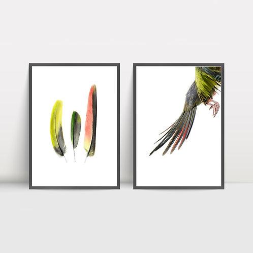 Print Set: Princess Parrot Flight and Feathers