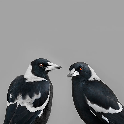 Mr and Mrs Magpie