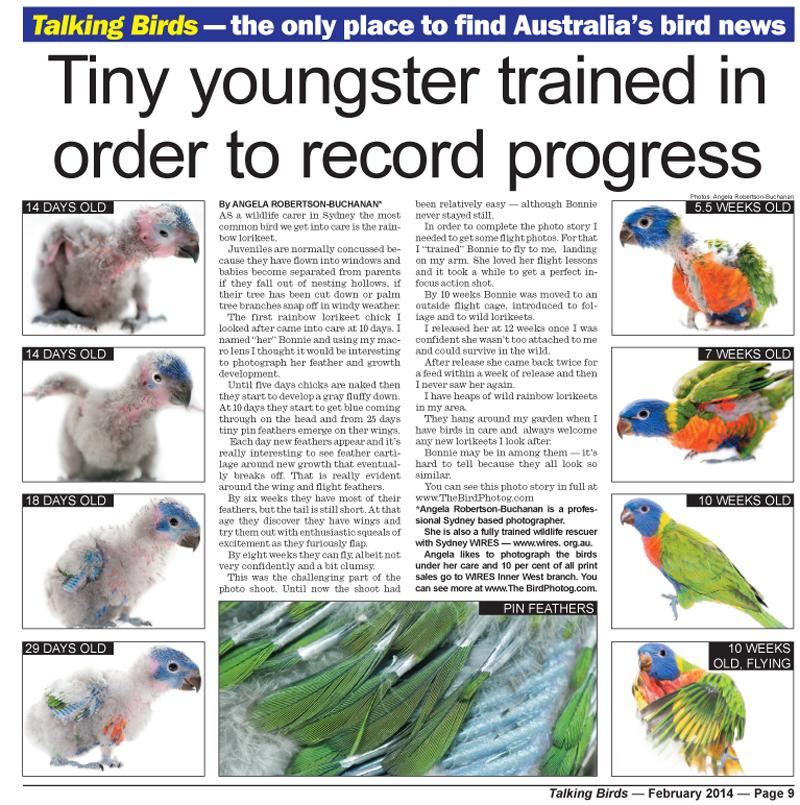 Talking Birds Editorial