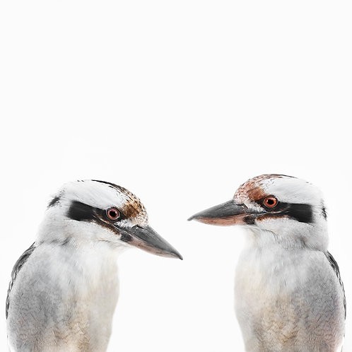 Mr and Mrs Kookaburra