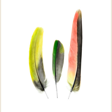 Princess Parrot Feathers