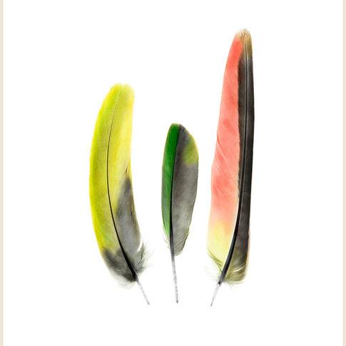 Princess Parrot Feathers