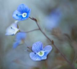 The Wellness Flower