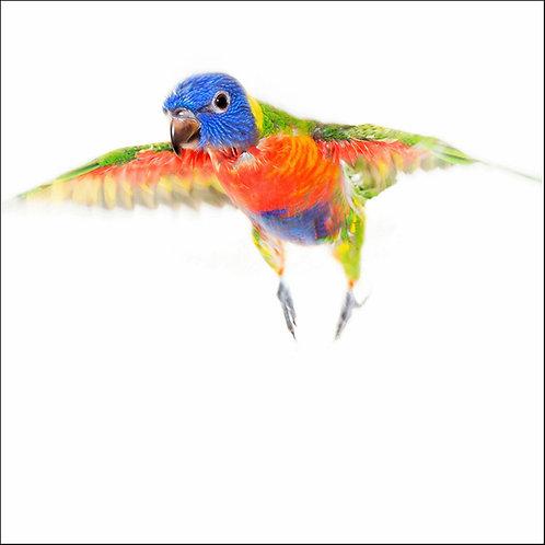 Fly Bonny Fly