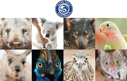 Set of 8 Australian Animal Cards