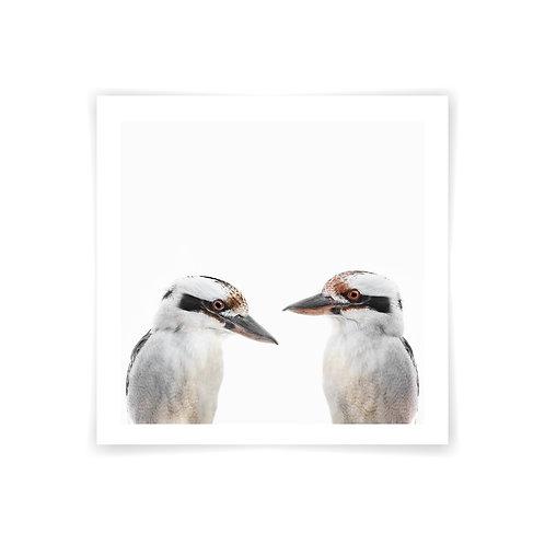 Mr and Mrs Kookaburra