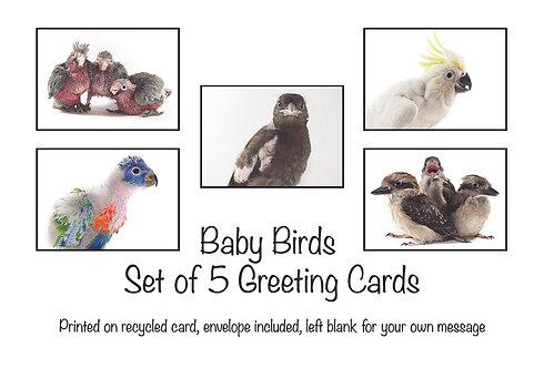 Baby Birds - Set of 5 Bird Cards