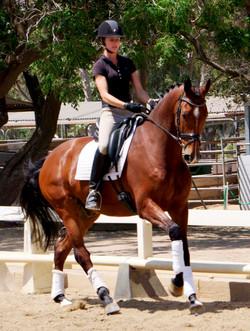 Dazzle dressage horse sales
