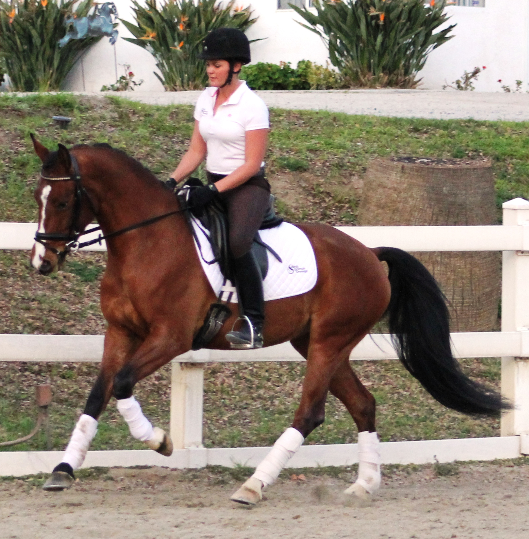 Ella - dressage horses for sale
