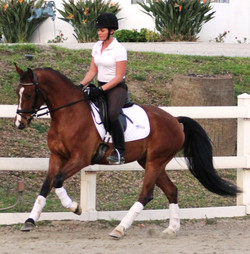 Ella - dressage horses for sale