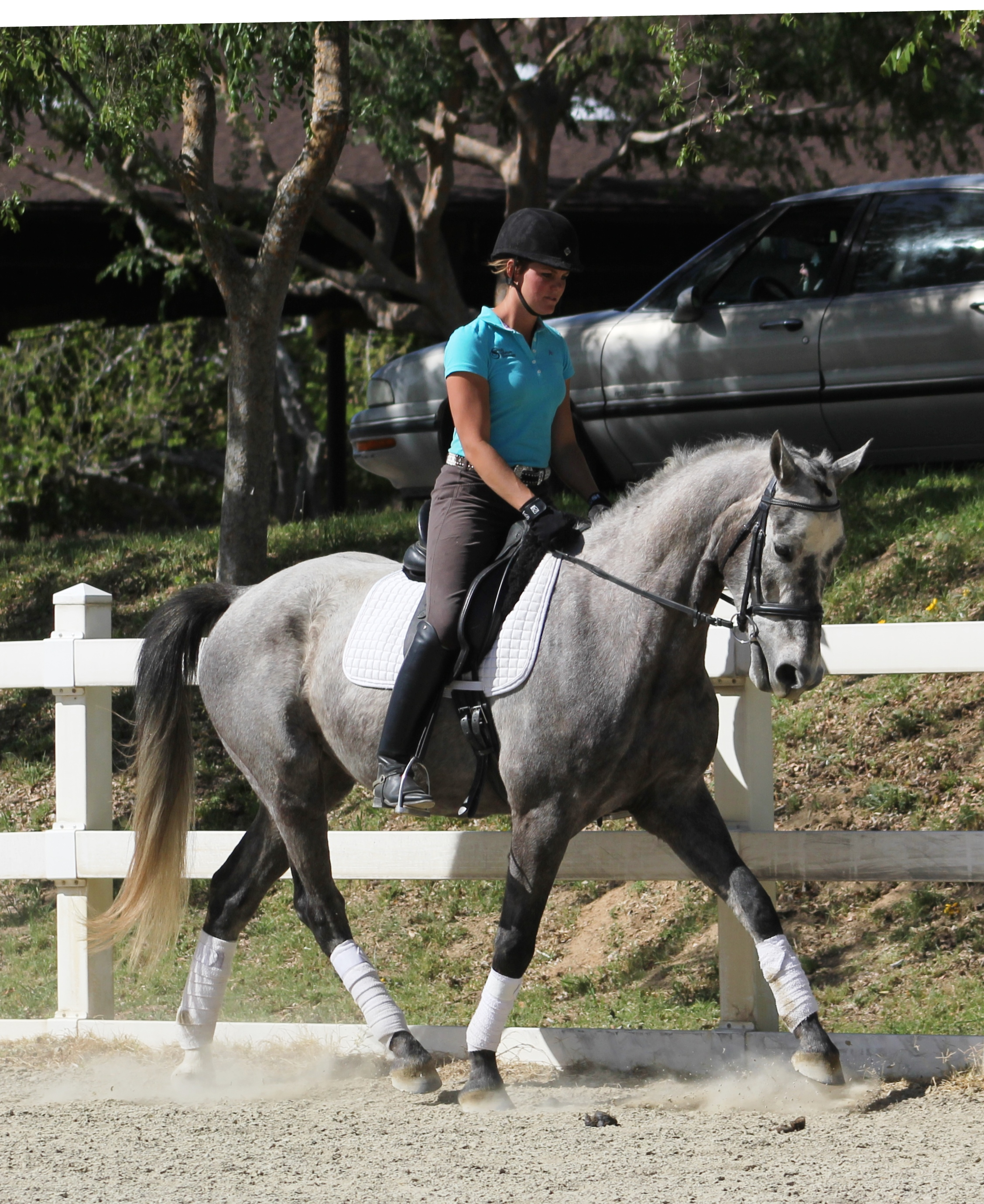 Lunar dressage horse california