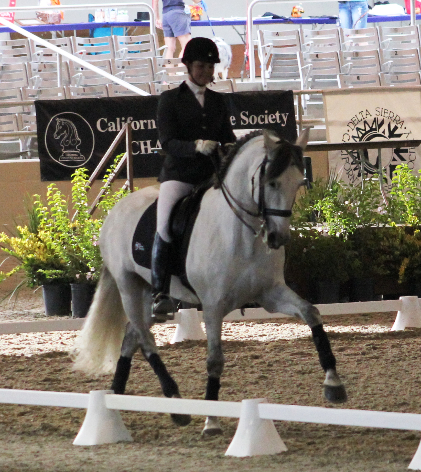 Dos - dressage horse sales