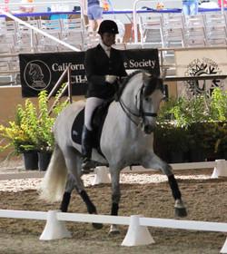 Dos - dressage horse sales