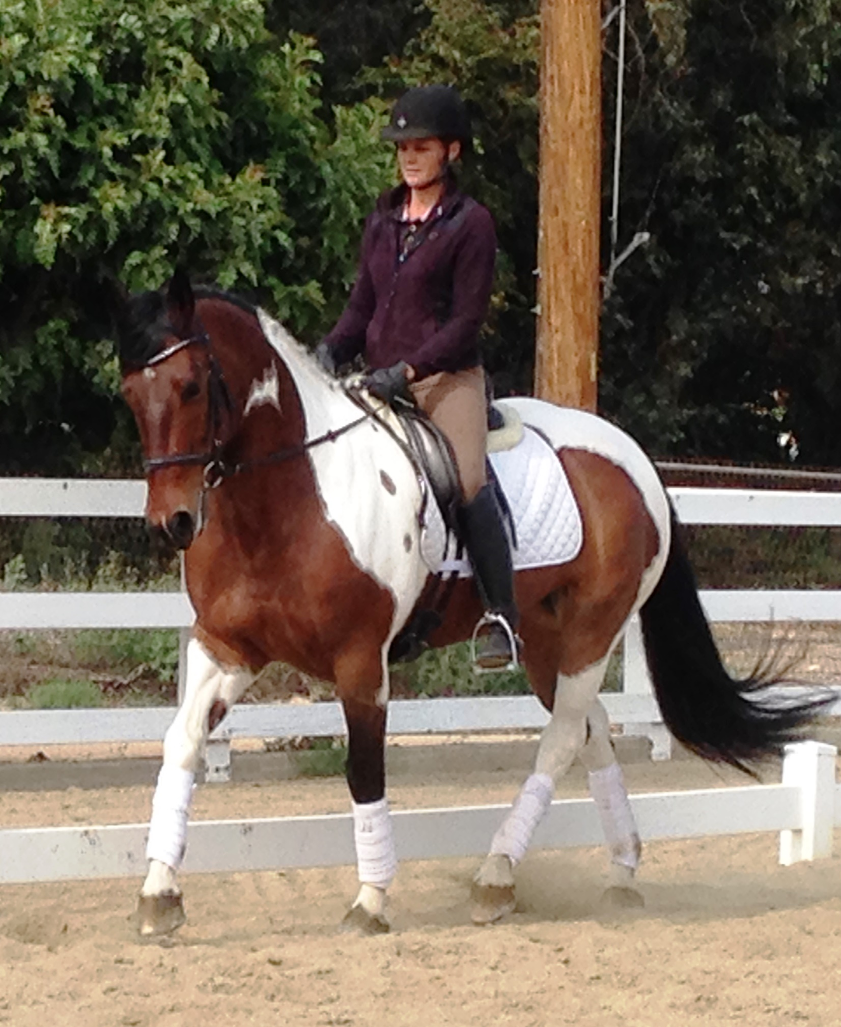Kira dressage horse sales California