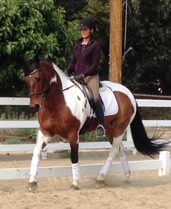 Kira dressage horse sales California