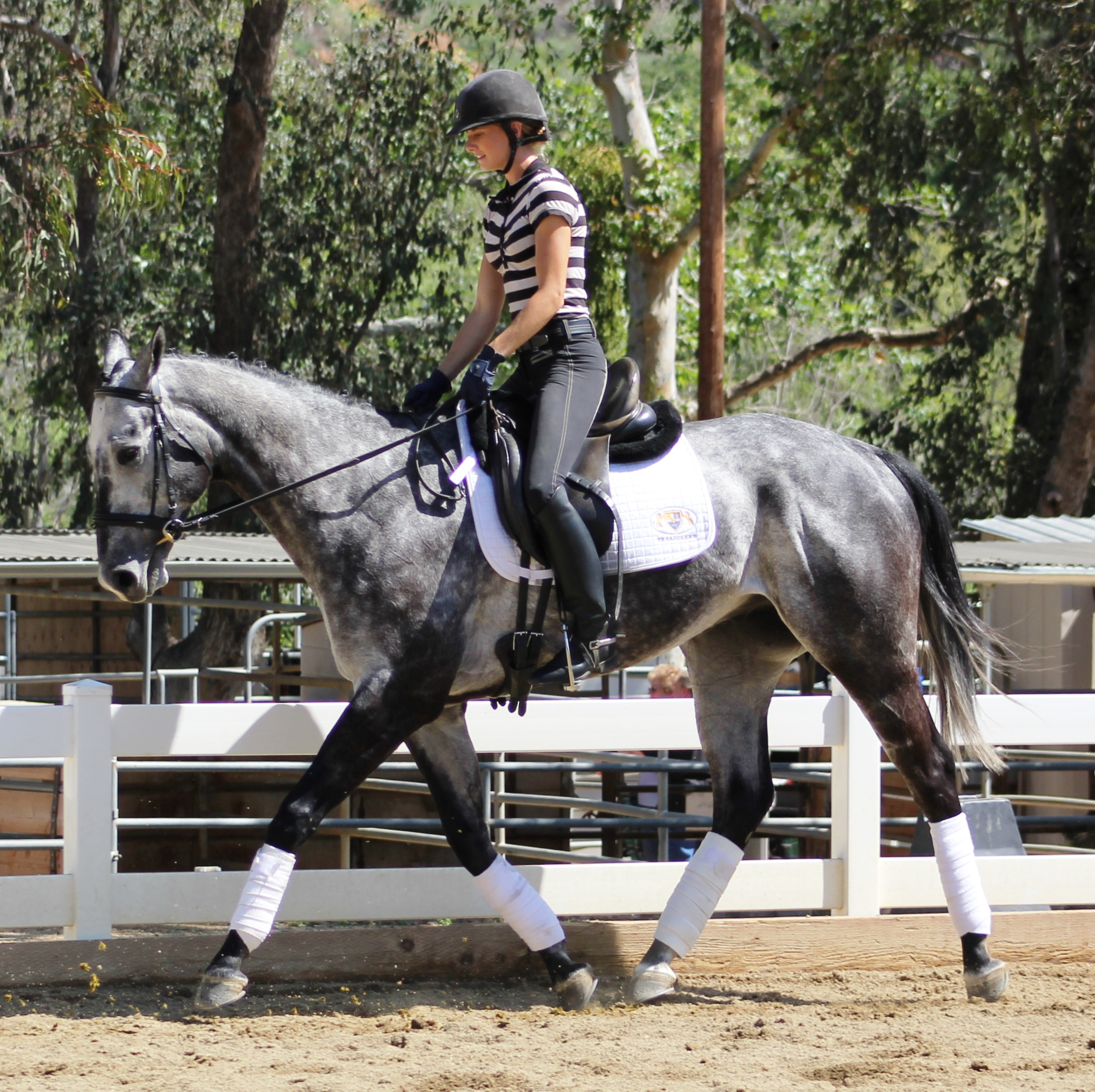 Dubly Sarah Lockman Dressage Horses