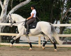 Luck - dressage horse sales
