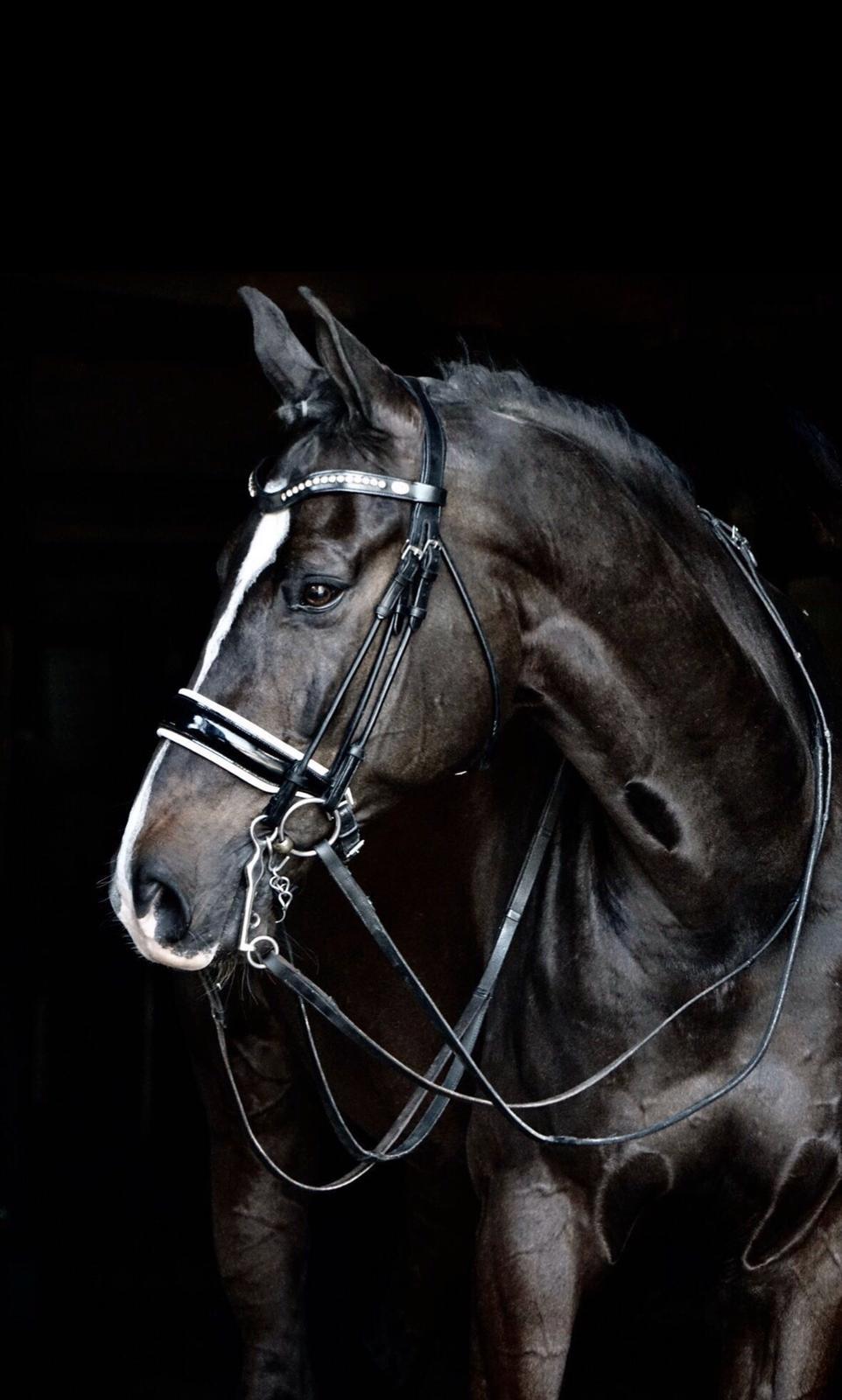 sarah lockman sale horse 2