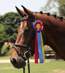 Batino - dressage horse sales
