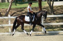 Falcon - dressage horse california