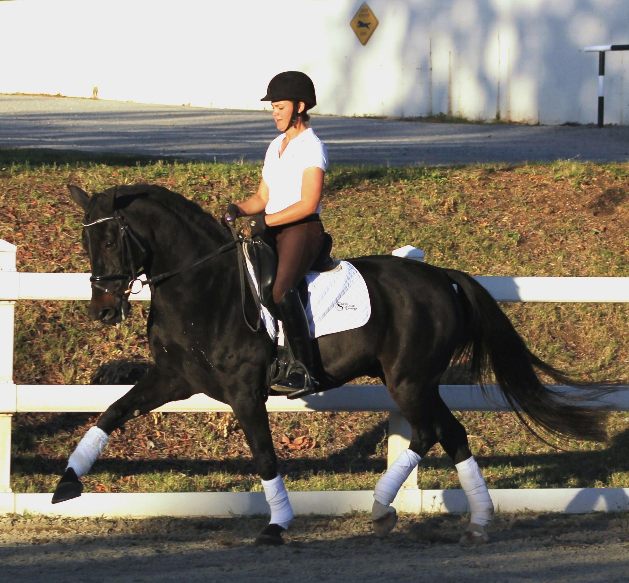 Poli - dressage horses