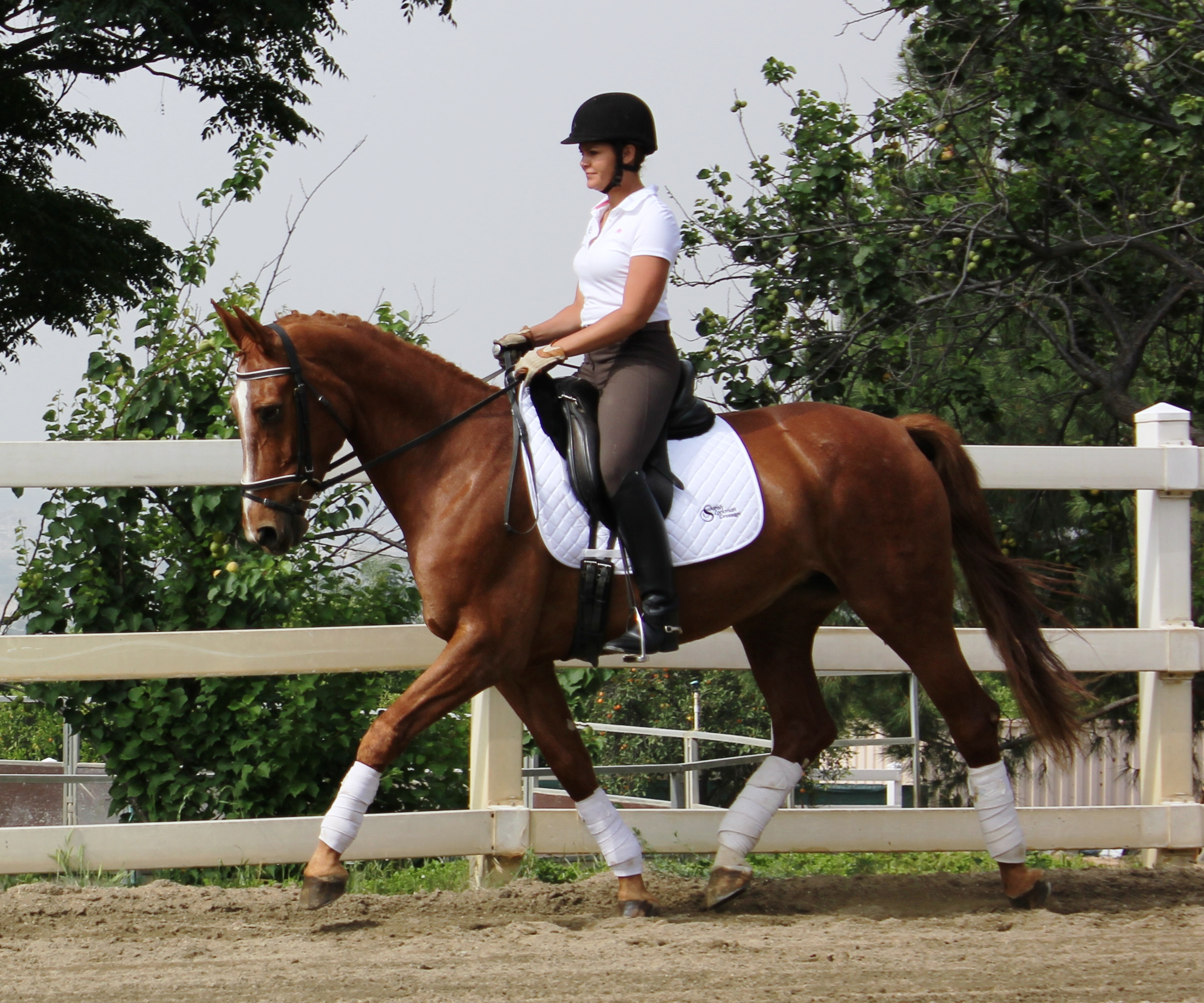 Gaea dressage horse sales