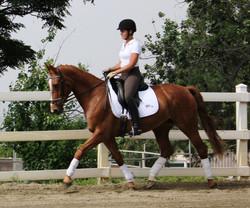 Gaea dressage horse sales