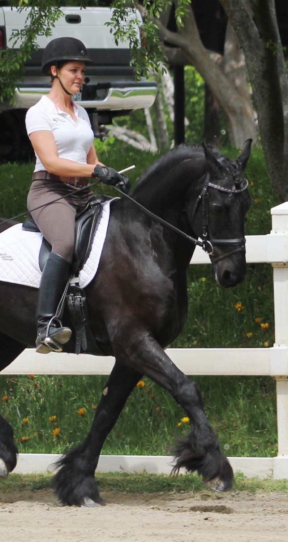 Pedro - dressage horses