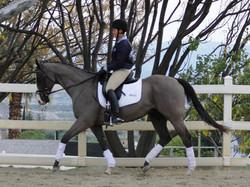 Bolardo dressage horse sold