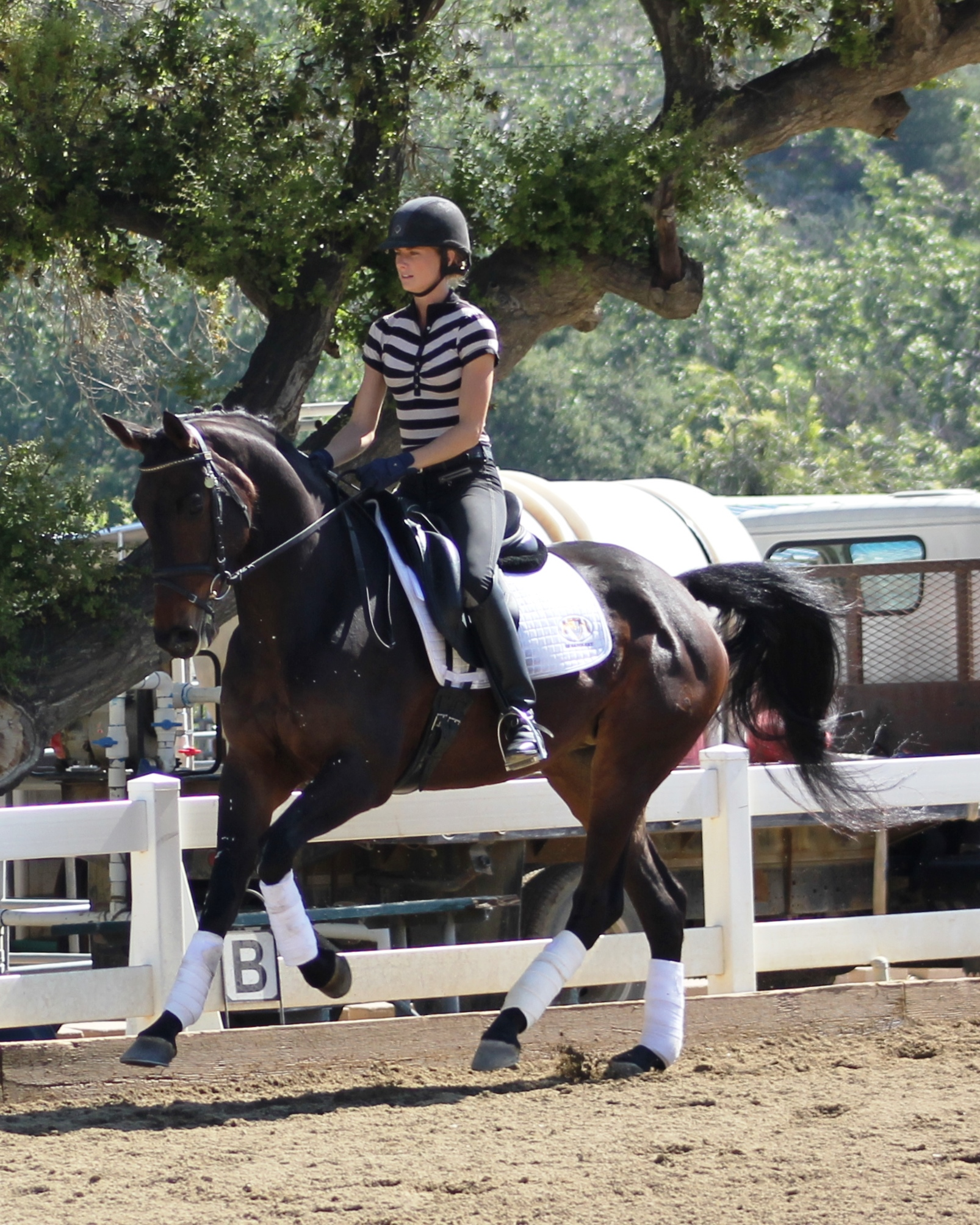 Lucky - dressage horses california