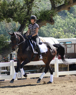 Lucky - dressage horses california