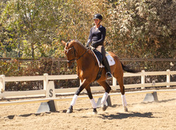 Juan - sold dressage horse